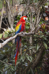Macaw bird full length image sitting in a tree