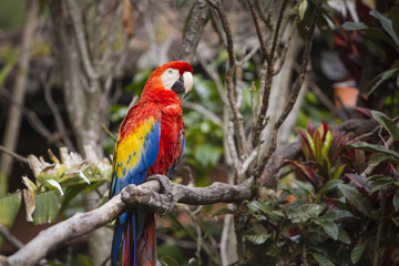 Macaw bird perched on a branch in a jungle