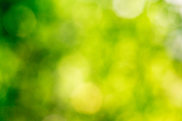 Wall Mural - green bokeh background