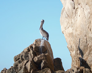 Pelican and shadow on Lands End at Cabo San Lucas Baja Mexico BCS