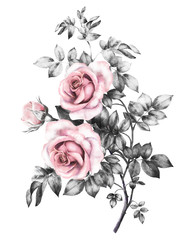 watercolor flowers. floral illustration in Pastel colors, pink rose. branch of flowers isolated on white background. gray Leaf and buds. Cute composition for wedding or greeting card. bouqet