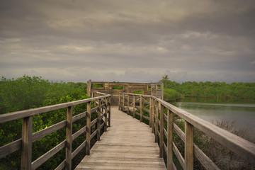 Bird Observatory Board walk at Eydhigili Kullhi ( Mangroves) Maldives