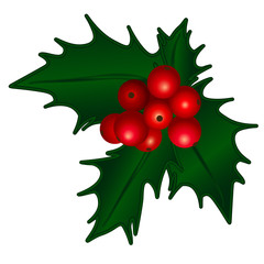 Holly Berry, Christmas berries
