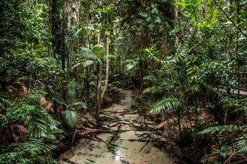 Jungle Australia Fraser Island