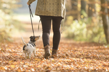Woman is walking with dog in forest