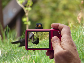 Blackbird in camera viewfinder