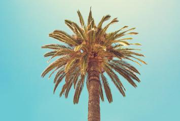 Palm Tree close up.
