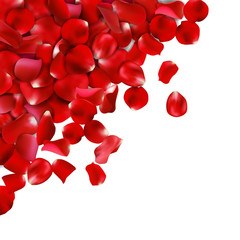Background of red rose petals. Vector illustration, Isolated on white background
