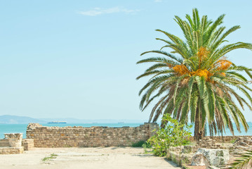 date palm and ruins at Tunis Africa