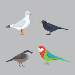 Popular birding species collection