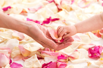 Female and baby hands with rose petals