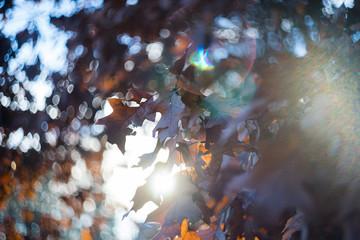 Autumn leaves, sunset