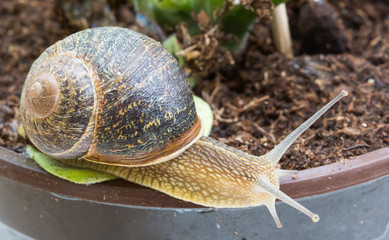 how to stop snails eating pot plants