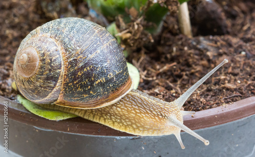 """Snail crawling o..."