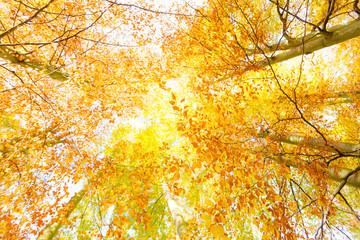 Trees in sunshine.