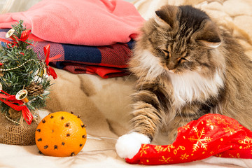 New year cat  playing with Santa red hat