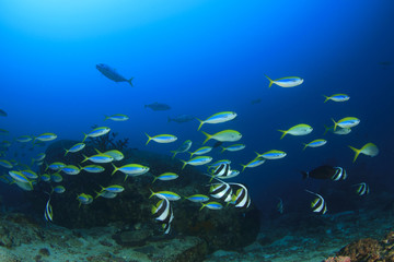 Fish school coral reef