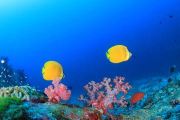 Fish,coral reef,scuba diving underwater