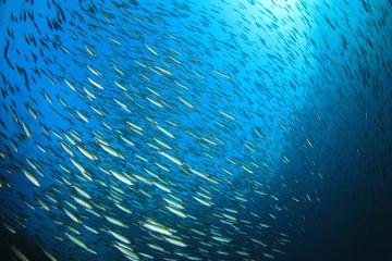 Fish in ocean on underwater coral reef