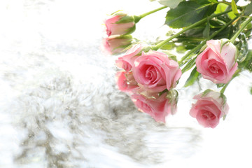 pink rose and water flow background