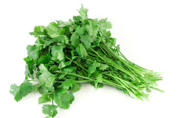 Wall Mural - fresh cilantro coriander isolated on white background
