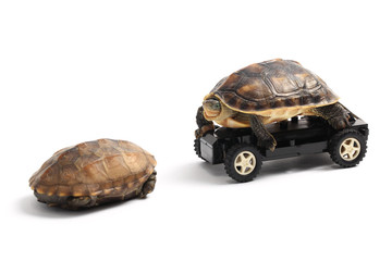 Two Turtles with Toy Car