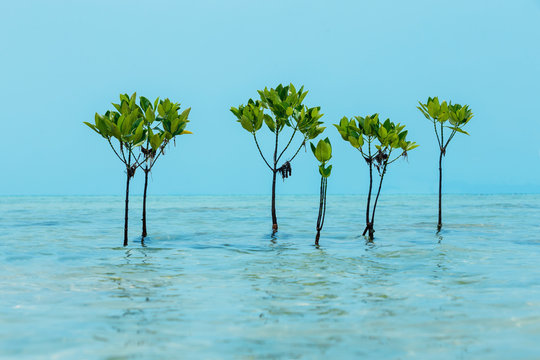 Group of mangrove trees at water surface tropical sea background