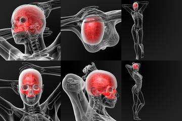 3D rendering illustration of the skull bone - upper half