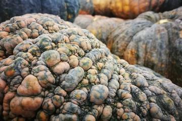 Closeup pumpkin skin, Pumpkin background.