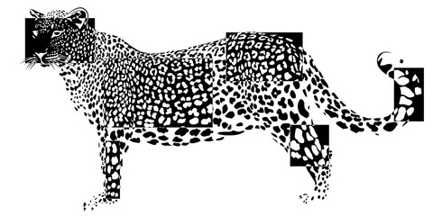 The leopard in negative rectangles on white background