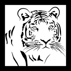 muzzle of a tiger on a white background in a frame