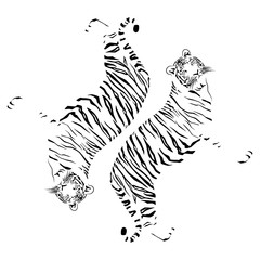 tigers on a white background