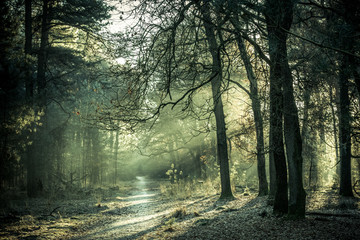 Morning sun shining through the trees on  a small forest path