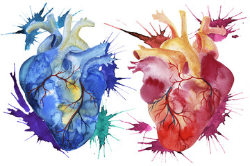 Hand painted watercolor anatomical hearts.