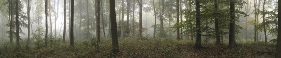Spoed Fotobehang Bleke violet Panorama landscape image of Wendover Woods on foggy Autumn Morni