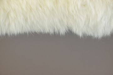 White fur and gray wall painted background