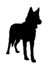 Czechoslovakian Wolf dog Silhouette on White Background