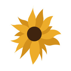 Simple Sunflower on White Background