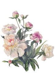 white peonies bunch watercolor isolated