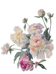 white peonies cluster watercolor isolated