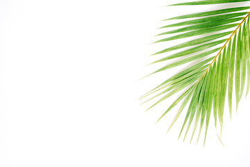 palm branch isolated on white background. flat lay, top view