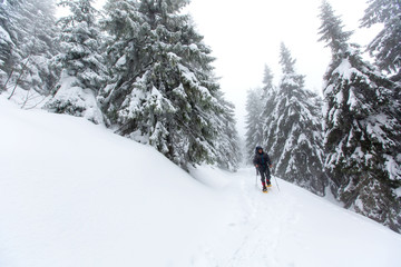Man is hiking in winter forest on cloudy day