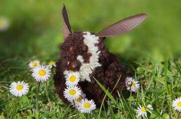 süßer kleiner Osterhase im Gras, mit Gänseblümchen