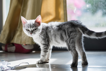 Cute kitten in home