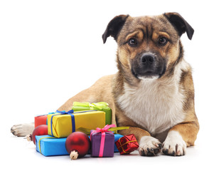 Puppy with gifts.