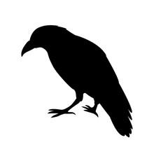 raven black silhouette vector illustration