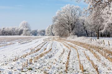 Crop field in winter landsacpe
