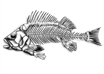 black fish skeleton