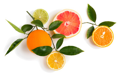 Different  citrus fruits on a twig.