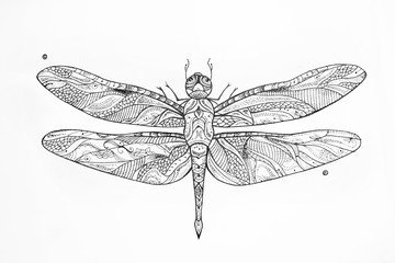 Sketch of a dragonfly in the patterns on white background.